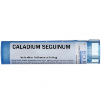 Caladium seguinum  - Multidose Tube