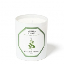 Mentha Spicata - Candle (Spearmint) - 6.5oz