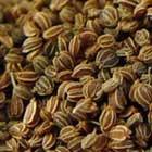 Oribe: Celery Seed Extract