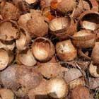 Crushed Coconut Shells