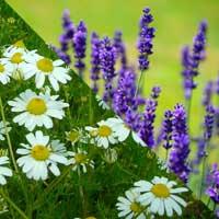Oribe: Lavender & Chamomile