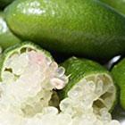 OR Caviar Lime