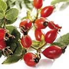Rosa Canina Fruit Extract