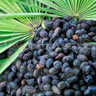 R+Co: Saw Palmetto Berry Extract